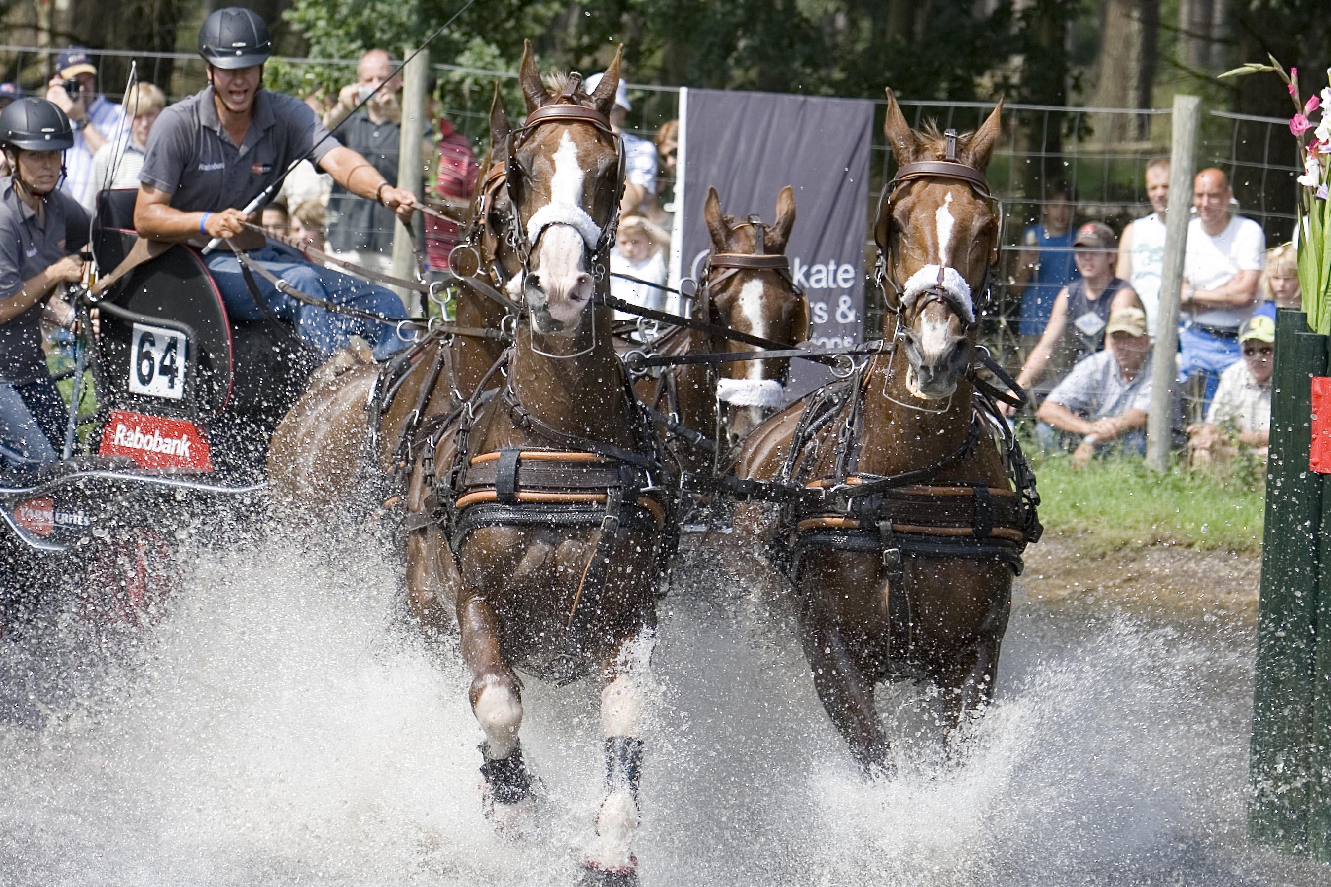 Paardenspektakel Beekbergen Gelderse Sport Federatie